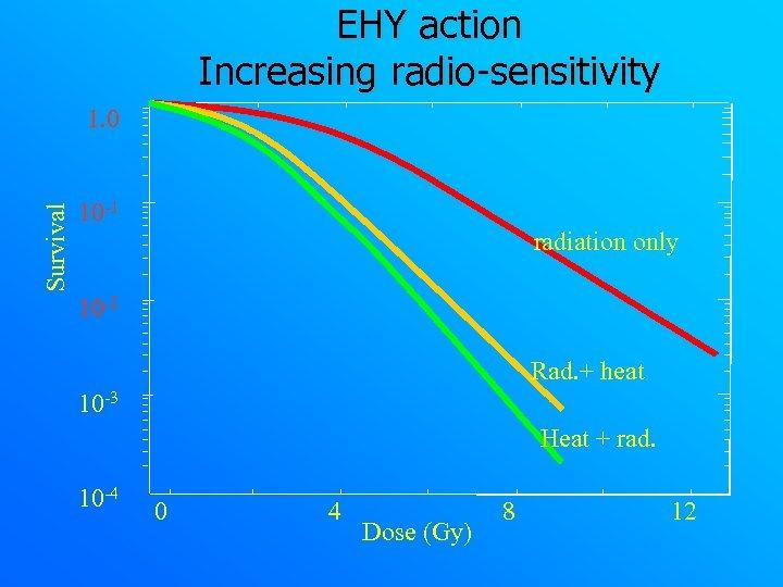 EHY action Increasing radio-sensitivity Survival 1. 0 10 -1 radiation only 10 -2 Rad.