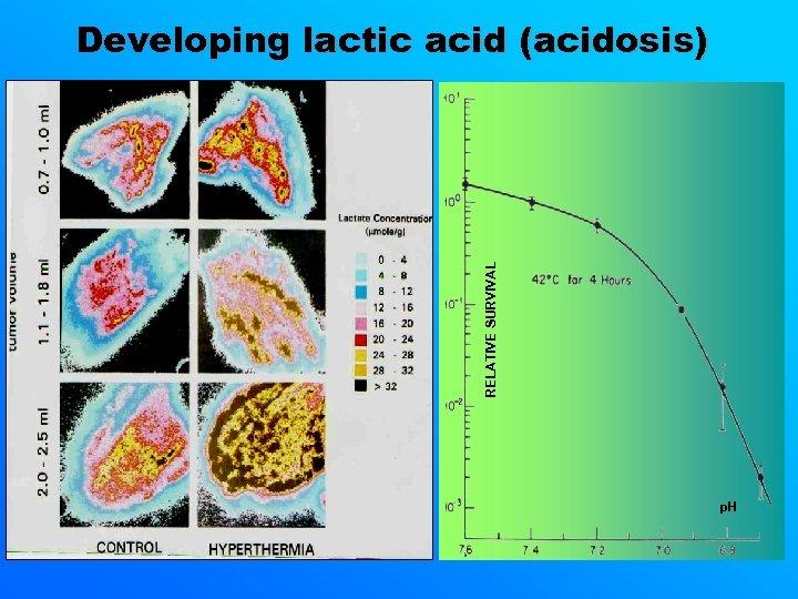 RELATIVE SURVIVAL Developing lactic acid (acidosis) p. H