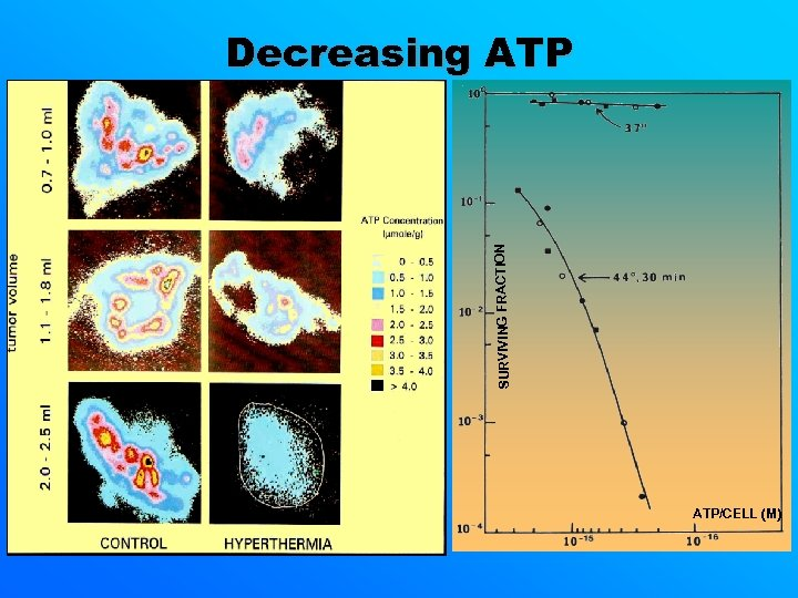 SURVIVING FRACTION Decreasing ATP/CELL (M)
