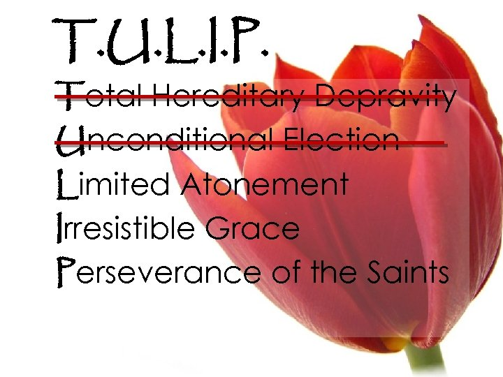 T. U. L. I. P. Total Hereditary Depravity Unconditional Election Limited Atonement Irresistible Grace