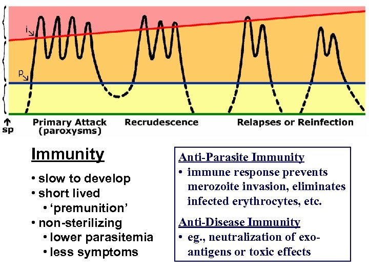 Immunity • slow to develop • short lived • 'premunition' • non-sterilizing • lower