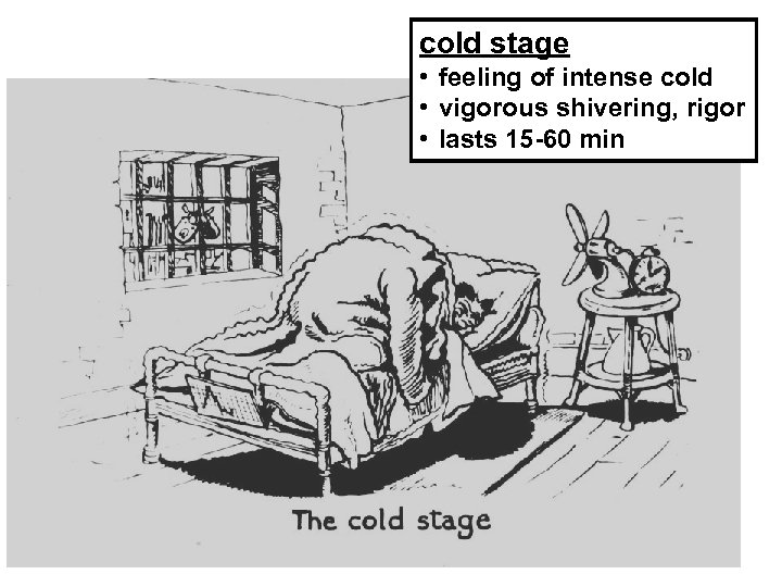 cold stage • feeling of intense cold • vigorous shivering, rigor • lasts 15