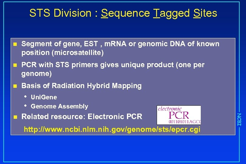 STS Division : Sequence Tagged Sites n Segment of gene, EST , m. RNA