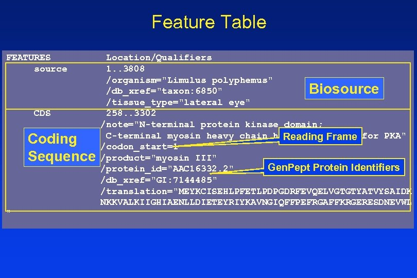 Feature Table FEATURES source CDS Coding Sequence