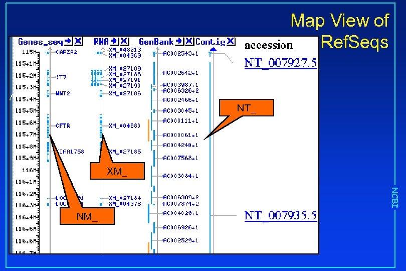 Map View of Ref. Seqs NT_ XM_ NCBI NM_
