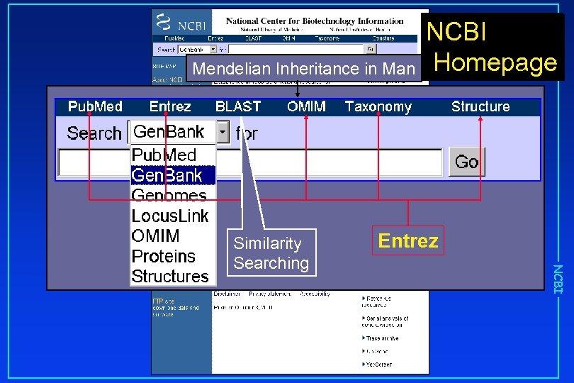 Mendelian Inheritance in Man Entrez NCBI Similarity Searching NCBI Homepage