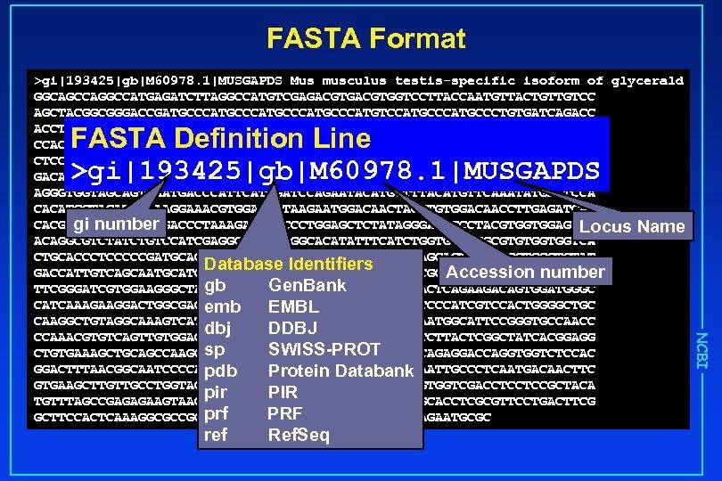 FASTA Format >gi|193425|gb|M 60978. 1|MUSGAPDS Mus musculus testis-specific isoform of glycerald GGCAGCCAGGCCATGAGATCTTAGGCCATGTCGAGACGTGGTCCTTACCAATGTTACTGTTGTCC AGCTACGGCGGGACCGATGCCCATGCCCATGTCCATGCCCTGTGATCAGACC ACCTCCACCCAAGCTTGAGGATCCACCACGGTTGAAGAACAGCCACCGCCGCCGCCACCTCCACCACCACCTCCTCCTCCACCCCAGATAGAGCCAGACAAGTTTGAAGAGGCTCCCCCTCCTCCTCCCCCTCCTCCACCACTCCAAAAGCCAGCTAGAGAGCT