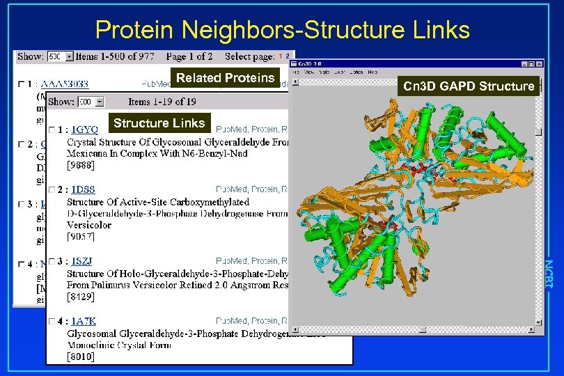 Protein Neighbors-Structure Links Related Proteins Cn 3 D GAPD Structure Links NCBI