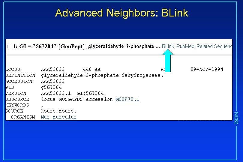 Advanced Neighbors: BLink NCBI
