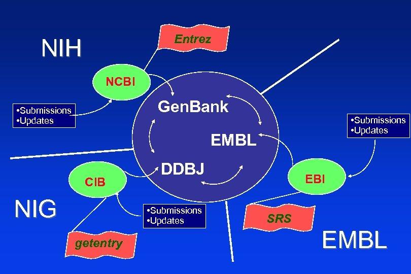 Entrez NIH NCBI Gen. Bank • Submissions • Updates EMBL CIB NIG DDBJ •