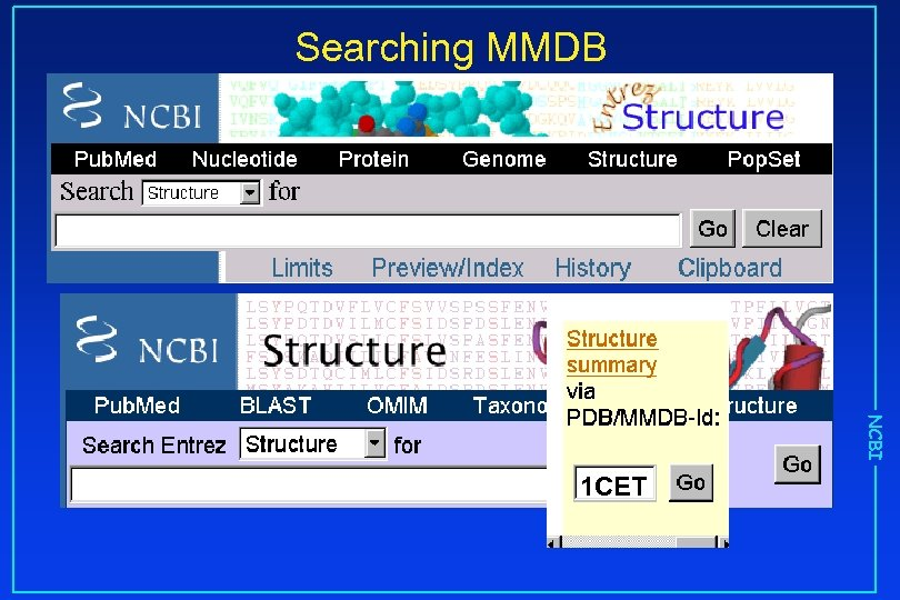 Searching MMDB NCBI 1 CET