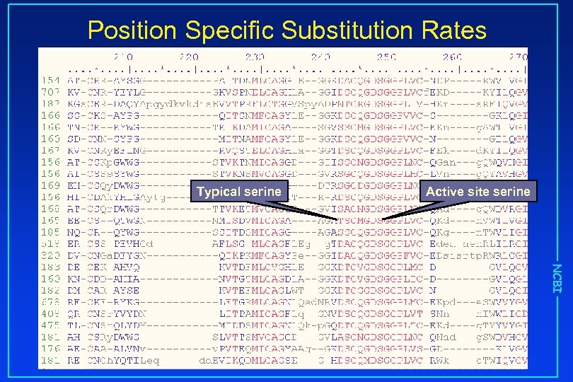 Position Specific Substitution Rates Typical serine Active site serine NCBI