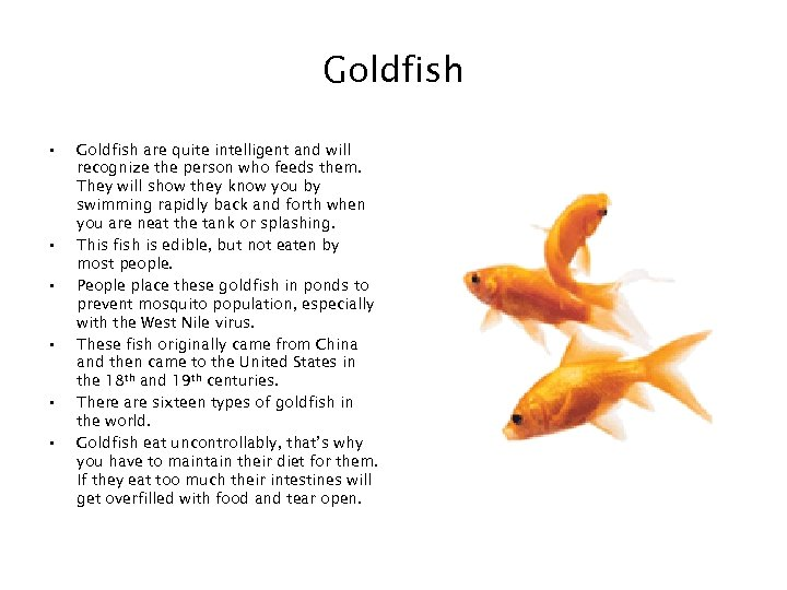 Goldfish • • • Goldfish are quite intelligent and will recognize the person who
