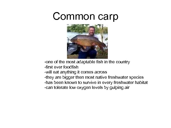 Common carp -one of the most adaptable fish in the country -first ever foodfish