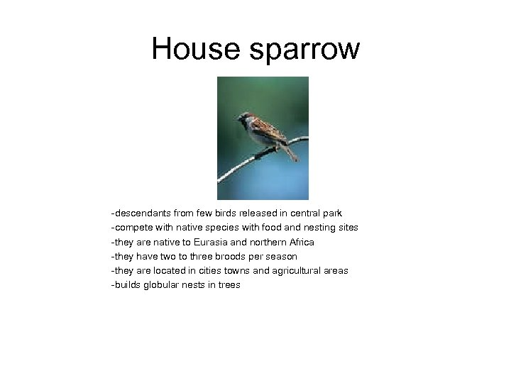 House sparrow -descendants from few birds released in central park -compete with native species