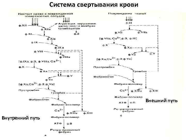 Система свертывания крови Внешний путь Внутренний путь
