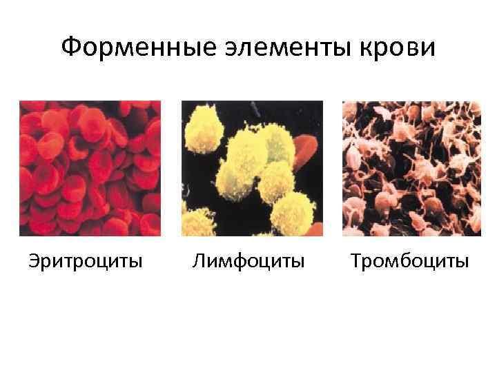 Форменные элементы крови Эритроциты Лимфоциты Тромбоциты