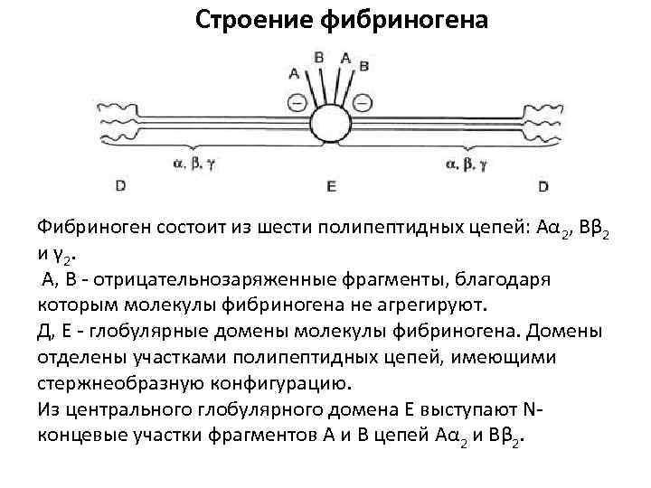 Строение фибриногена Фибриноген состоит из шести полипептидных цепей: Аα 2, Вβ 2 и γ