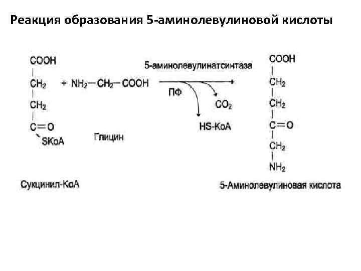Реакция образования 5 -аминолевулиновой кислоты