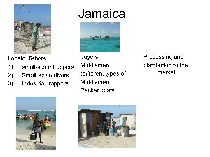 Jamaica Lobster fishers 1) small-scale trappers 2) Small-scale divers 3) Industrial trappers buyers Middlemen