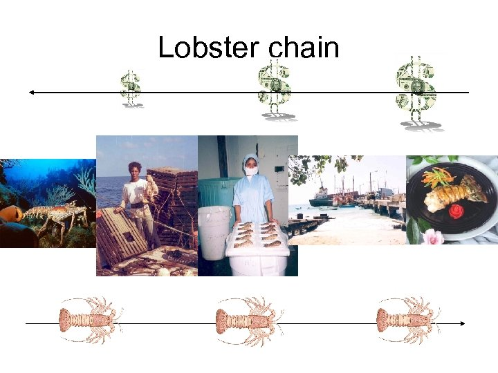 Lobster chain
