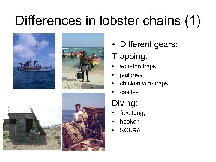 Differences in lobster chains (1) • Different gears: Trapping: • • wooden traps jaulones