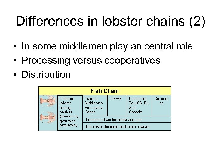 Differences in lobster chains (2) • In some middlemen play an central role •