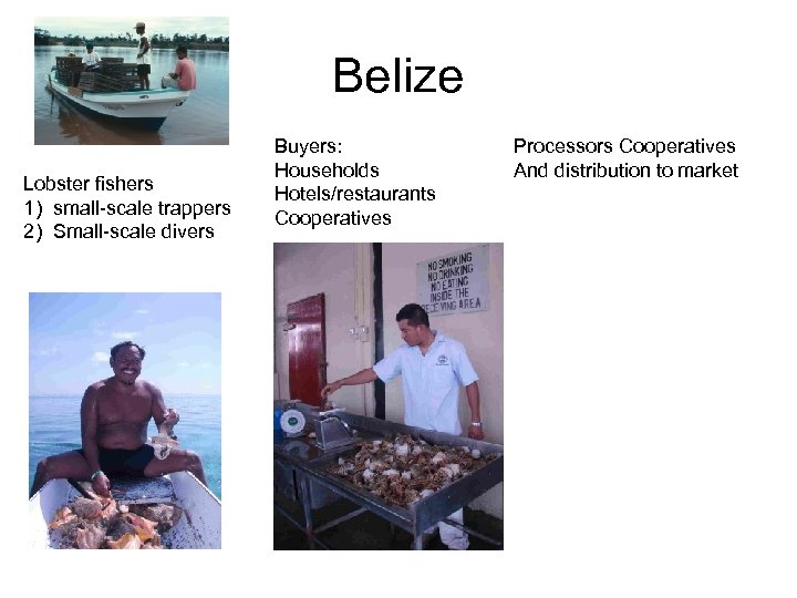 Belize Lobster fishers 1) small-scale trappers 2) Small-scale divers Buyers: Households Hotels/restaurants Cooperatives Processors