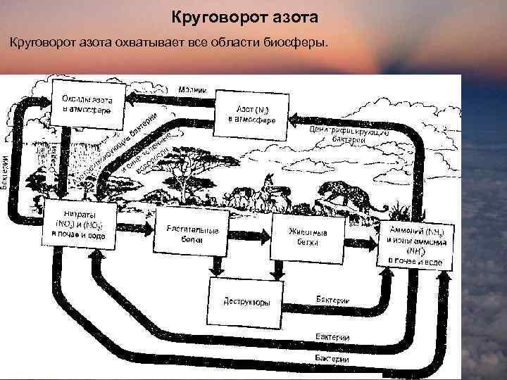 Круговорот азота охватывает все области биосферы.