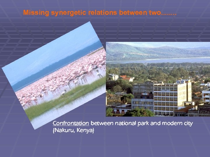 Missing synergetic relations between two. . . . Confrontation between national park and modern