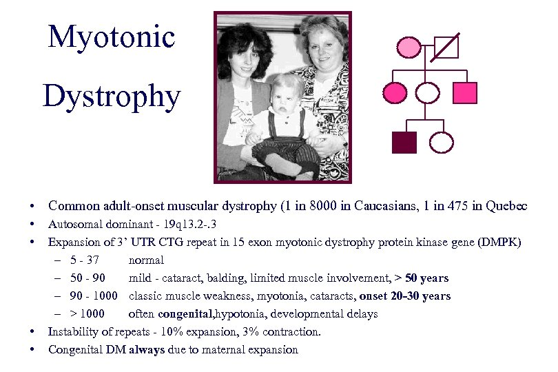Myotonic Dystrophy • Common adult-onset muscular dystrophy (1 in 8000 in Caucasians, 1 in