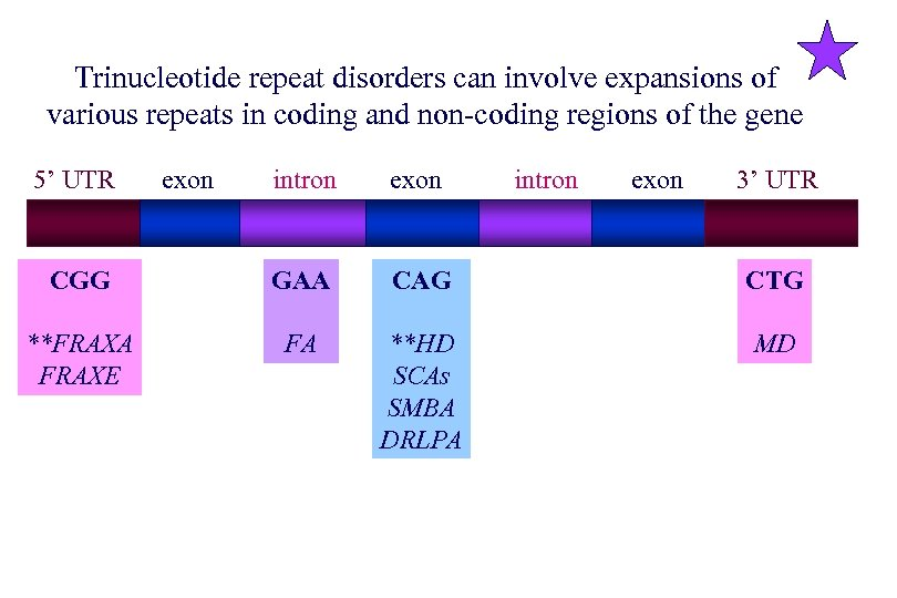 Trinucleotide repeat disorders can involve expansions of various repeats in coding and non-coding regions