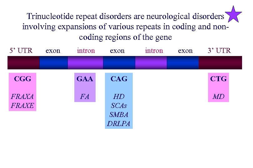 Trinucleotide repeat disorders are neurological disorders involving expansions of various repeats in coding and