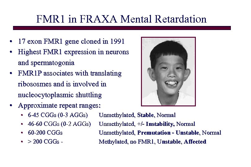 FMR 1 in FRAXA Mental Retardation • 17 exon FMR 1 gene cloned in
