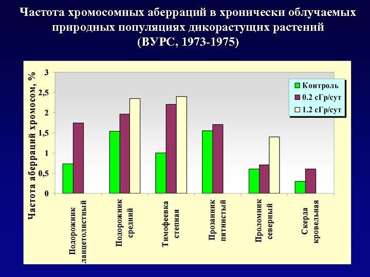 Частота хромосомных аберраций в хронически облучаемых природных популяциях дикорастущих растений (ВУРС, 1973 -1975)