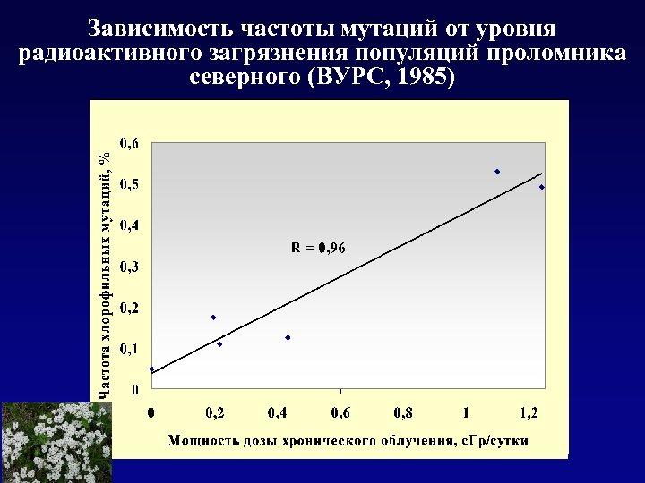 Зависимость частоты мутаций от уровня радиоактивного загрязнения популяций проломника северного (ВУРС, 1985)