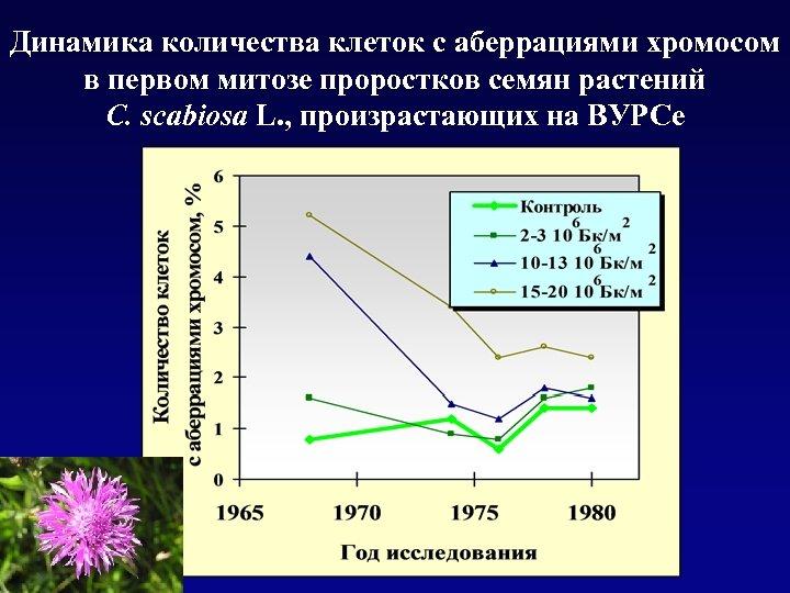 Динамика количества клеток с аберрациями хромосом в первом митозе проростков семян растений C. scabiosa