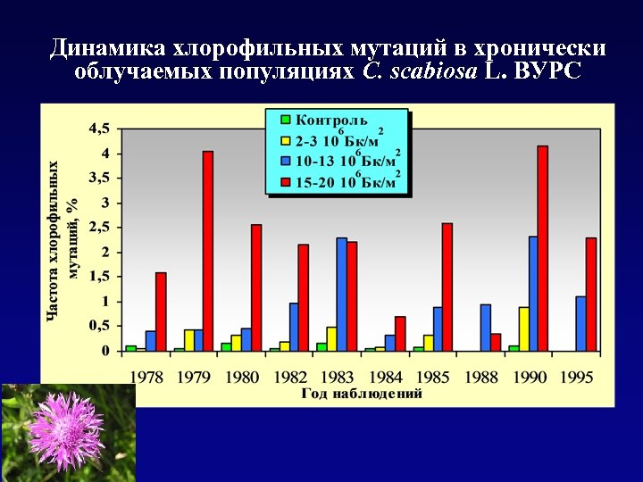 Динамика хлорофильных мутаций в хронически облучаемых популяциях C. scabiosa L. ВУРС