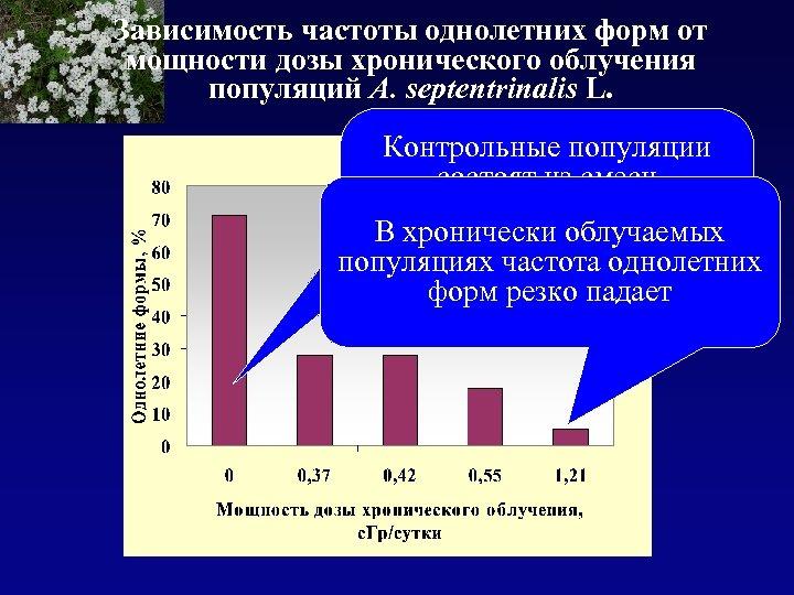 Зависимость частоты однолетних форм от мощности дозы хронического облучения популяций A. septentrinalis L. Контрольные