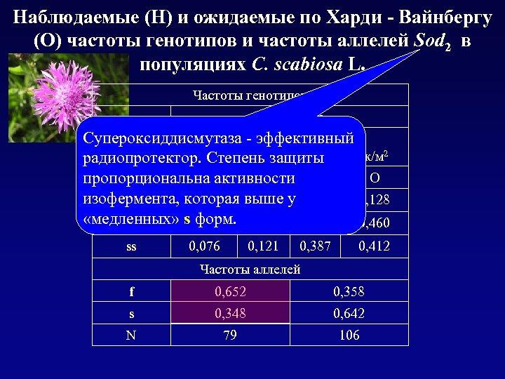 Наблюдаемые (Н) и ожидаемые по Харди - Вайнбергу (О) частоты генотипов и частоты аллелей