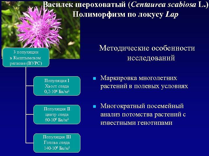 Василек шероховатый (Centaurea scabiosa L. ) Полиморфизм по локусу Lap Методические особенности исследований 3
