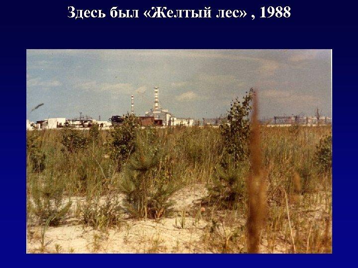 Здесь был «Желтый лес» , 1988