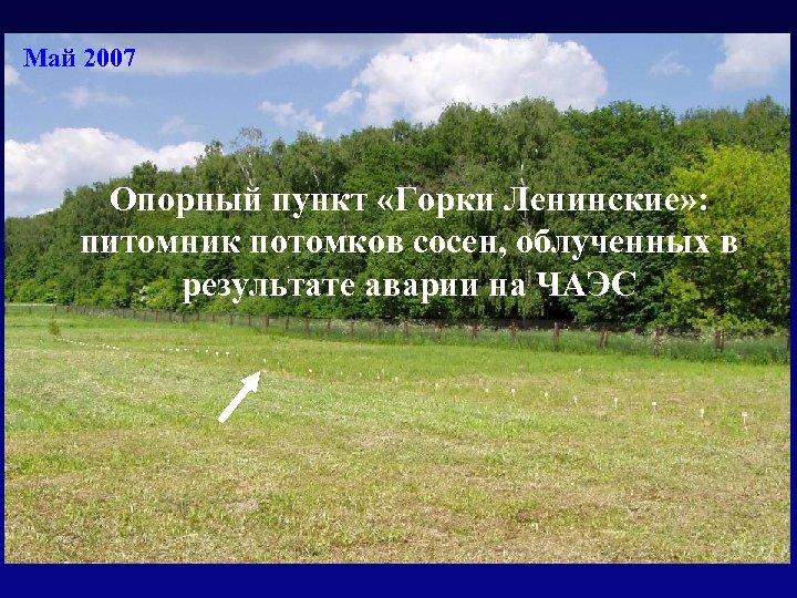 Май 2007 Опорный пункт «Горки Ленинские» : питомник потомков сосен, облученных в результате аварии