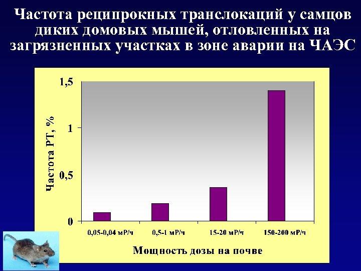Частота реципрокных транслокаций у самцов диких домовых мышей, отловленных на загрязненных участках в зоне