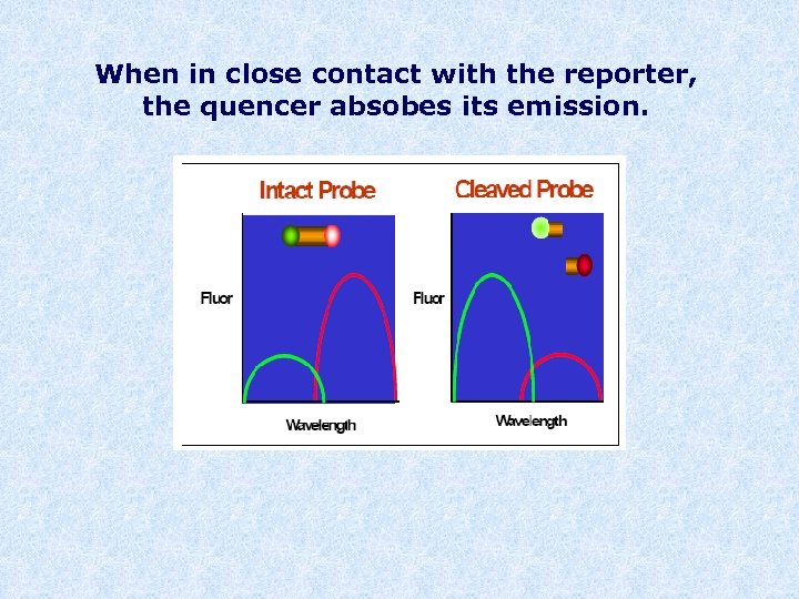 When in close contact with the reporter, the quencer absobes its emission.