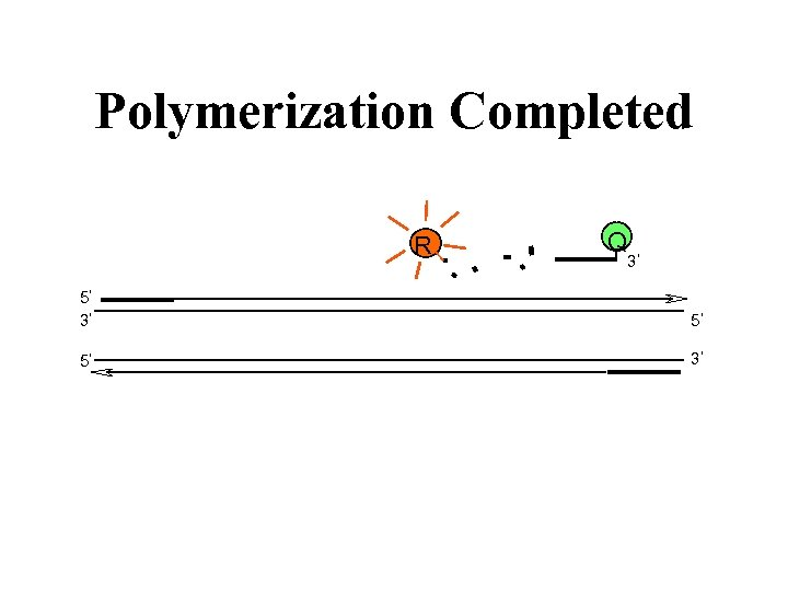 Polymerization Completed R Q 3 5 5 3