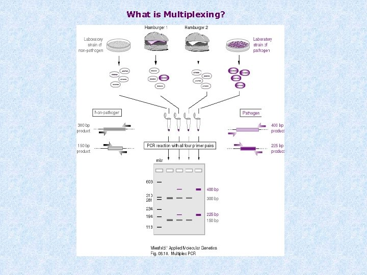 What is Multiplexing?