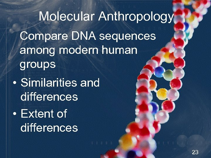 Molecular Anthropology Compare DNA sequences among modern human groups • Similarities and differences •