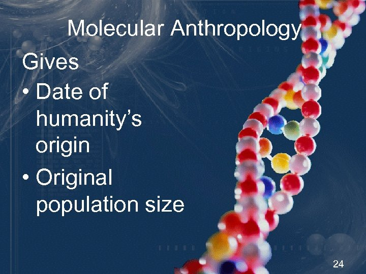 Molecular Anthropology Gives • Date of humanity's origin • Original population size 24
