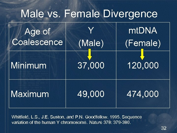 Male vs. Female Divergence Age of Coalescence Y (Male) mt. DNA (Female) Minimum 37,